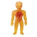 Stretch X-Ray Figure 7 Inch - Image 2