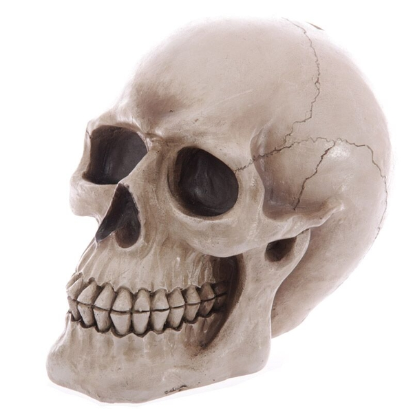 Large Lifesize Human Skull Money Box