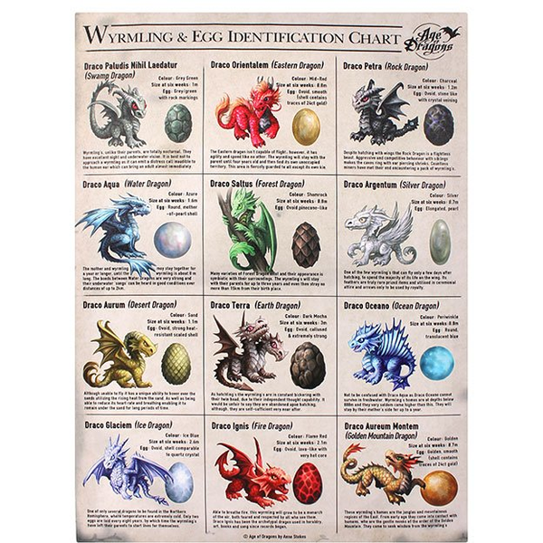 Small Wyrmling & Egg Identification Chart Canvas Picture by Anne Stokes