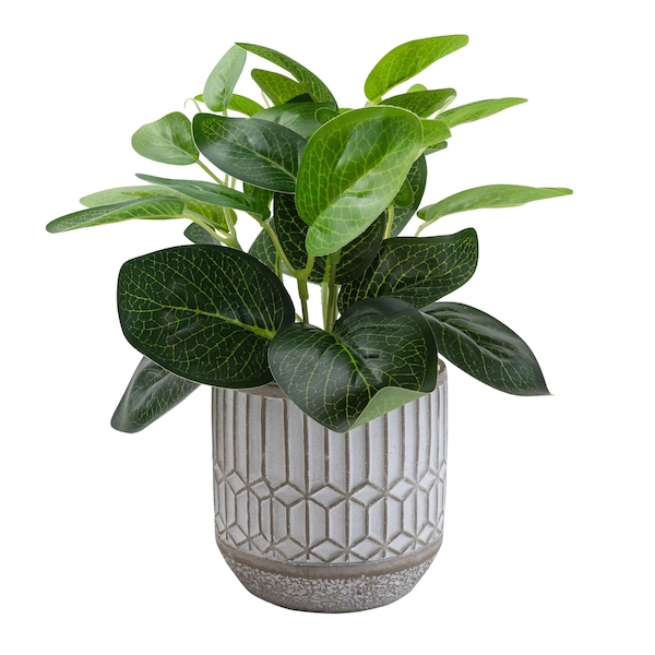 Evergreen Leaves in Cement Pot Grey 22cm