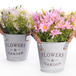 Artificial Daisy Plants - Set of 3 | M&W IHB Australia (NEW) - Image 5
