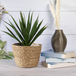 Seagrass Planters - Set of 3   M&W - Image 2