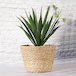 Seagrass Planters - Set of 3   M&W - Image 4