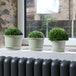 Plastic Plant Pots - Set of 10 | Pukkr Large - Image 5