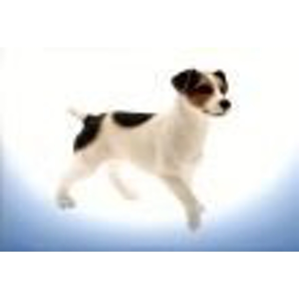 Jack Russell Terrier Figurine By Lesser & Pavey