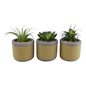 Set of 3 Small Succulents In Mediterranean Style Pots