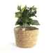 Seagrass Planters - Set of 3   M&W - Image 5