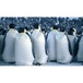 March of the Penguins Blu-Ray - Image 3