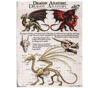 Small Dragon Anatomy Canvas Picture by Anne Stokes