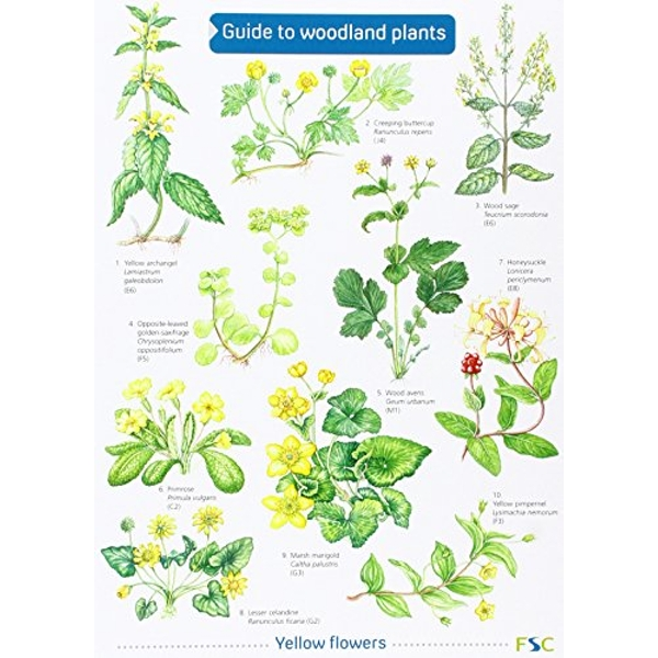Guide to Woodland Plants  1998 Sheet map, folded
