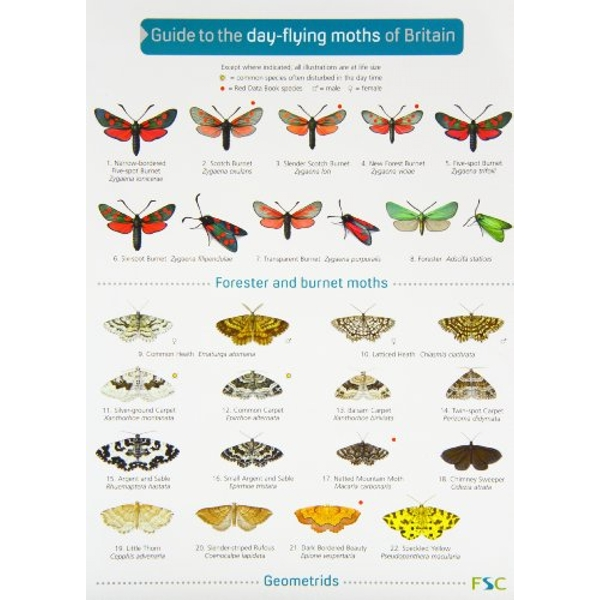 Guide to the Day-Flying Moths of Britain  2006 Wallchart