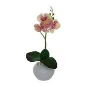 The Flower Patch Orchid Cream & Pink in Ceramic Pot 26cm