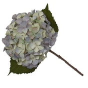 Single Hydrangea Two Tone Green and Blue Faux Stem 46cm