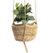 Two Tier Hanging Seagrass Planter | M&W - Image 8