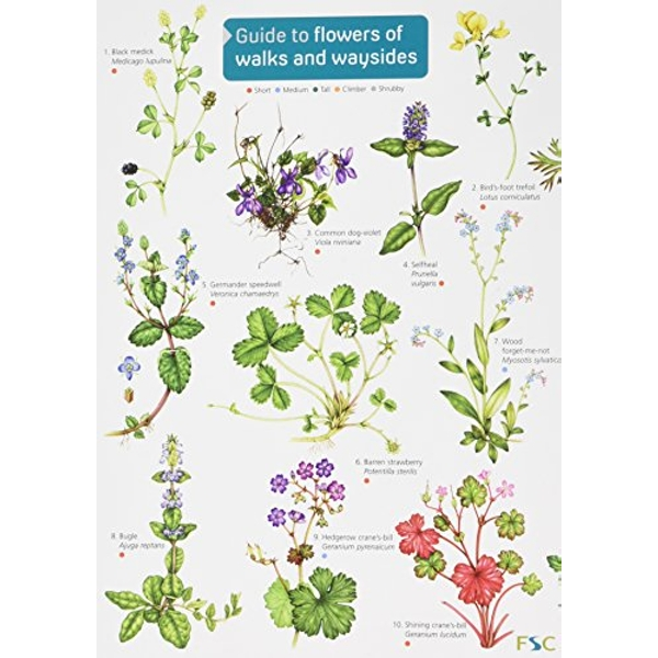 Guide to flowers of walks and waysides: 2017 by Rebecca Farley-Brown (Hardback, 2017)