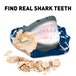 National Geographic Shark Teeth Dig Kit - Image 3