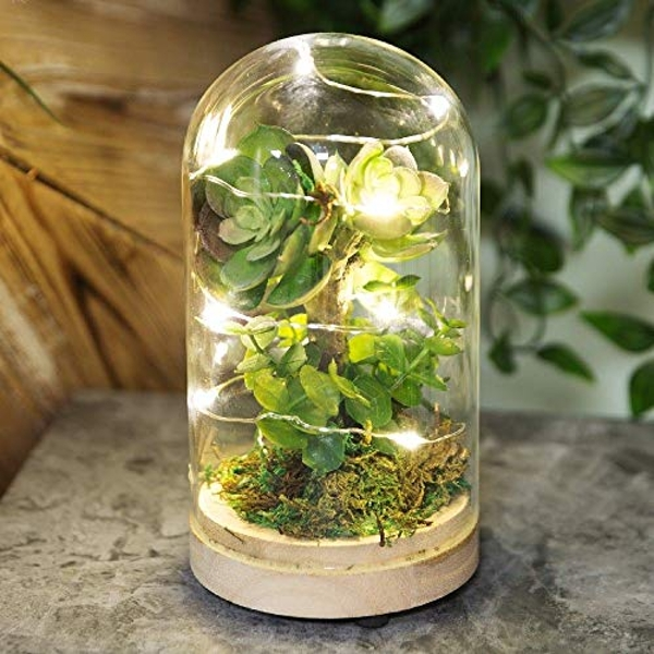 Dome Glass Terrarium with Artificial Succulent & LEDs 17.5cm