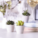 Set of 6 Artificial Small Succulent & Cacti Plants With Grey Planters for Home & Office Decor | M&W - Image 2