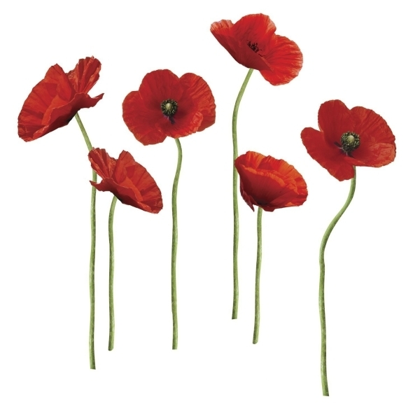 Ex-Display Poppies at Play Wall Stickers Used - Like New