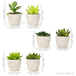 Set of 6 Artificial Fake Succulent Plants | M&W - Image 4