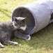 Suede Cat Tunnel | Pukkr - Image 6