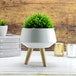 Ceramic Plant Pot | M&W - Image 2