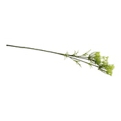 Single Spray of Cow Parsley With White Flowers, 79cm