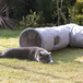 Suede Cat Tunnel | Pukkr - Image 8
